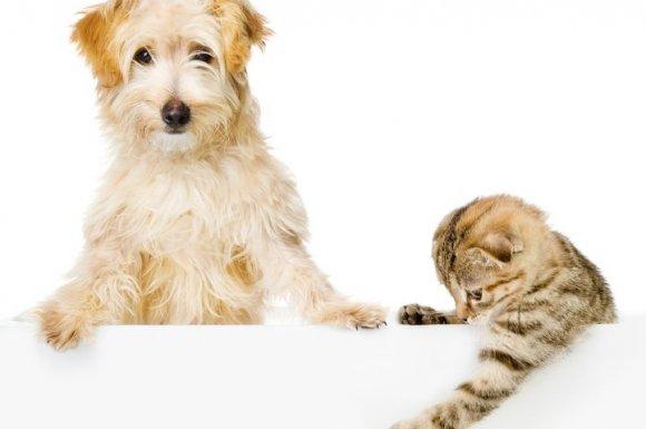 Restaurant avec animaux acceptés